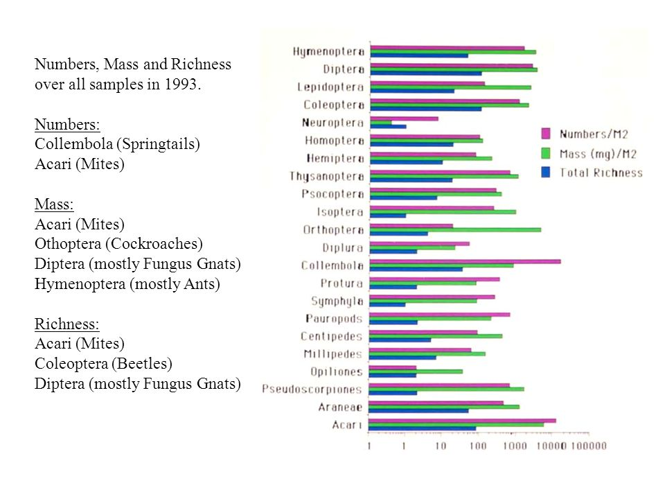 Numbers, Mass and Richness over all samples in 1993. Numbers: Collembola (Springtails) Acari (Mites) Mass: Acari (Mites) Othoptera (Cockroaches) Dipte