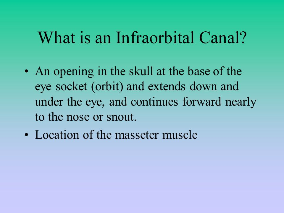 What is an Infraorbital Canal.