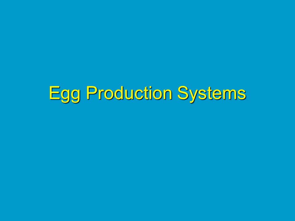 Egg Production Systems