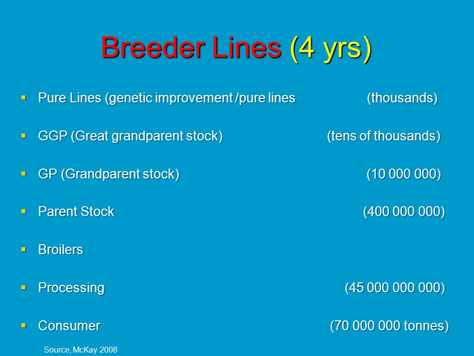 Breeder Lines (4 yrs)  Pure Lines (genetic improvement /pure lines (thousands)  GGP (Great grandparent stock) (tens of thousands)  GP (Grandparent stock) (10 000 000)  Parent Stock (400 000 000)  Broilers  Processing (45 000 000 000)  Consumer (70 000 000 tonnes) Source, McKay 2008