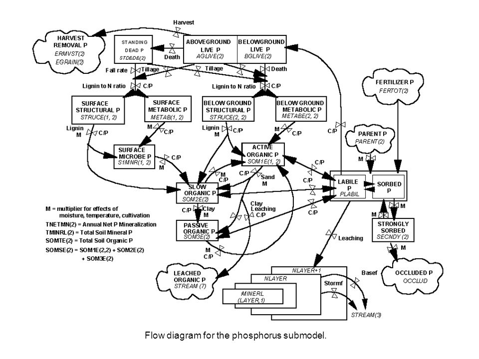 Flow diagram for the phosphorus submodel.