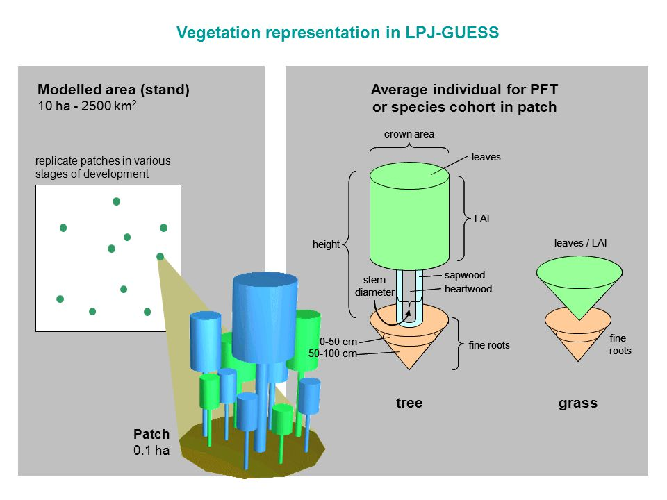 Vegetation representation in LPJ-GUESS