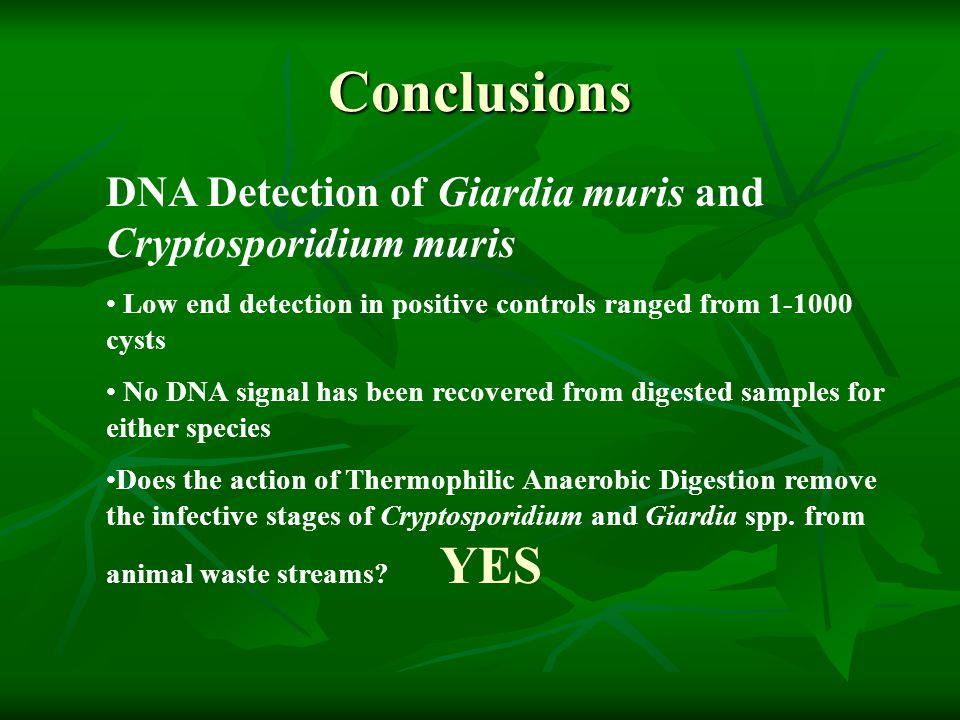 Conclusions DNA Detection of Giardia muris and Cryptosporidium muris Low end detection in positive controls ranged from 1-1000 cysts No DNA signal has been recovered from digested samples for either species Does the action of Thermophilic Anaerobic Digestion remove the infective stages of Cryptosporidium and Giardia spp.
