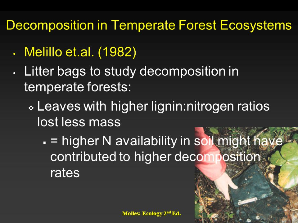 Molles: Ecology 2 nd Ed. Decomposition in Temperate Forest Ecosystems Melillo et.al. (1982) Litter bags to study decomposition in temperate forests: 