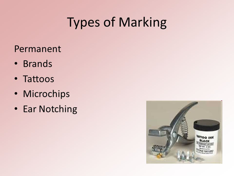 Types of Marking Temporary Wax crayon/chalk Ear tag Leg band Paint