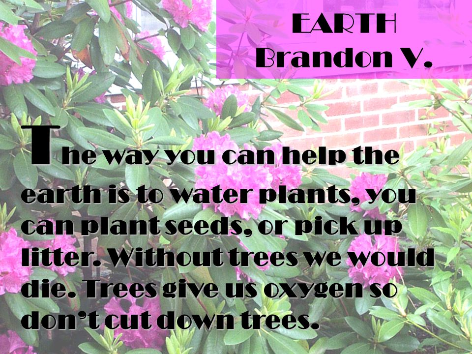 EARTH Brandon V. T he way you can help the earth is to water plants, you can plant seeds, or pick up litter. Without trees we would die. Trees give us