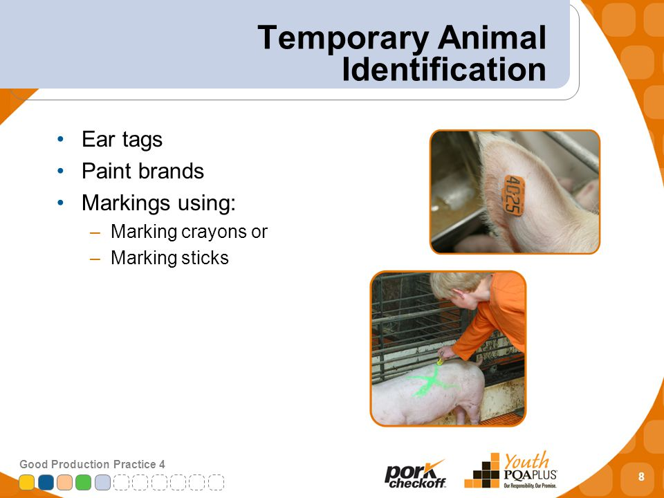 8 Good Production Practice 4 Temporary Animal Identification Ear tags Paint brands Markings using: –Marking crayons or –Marking sticks