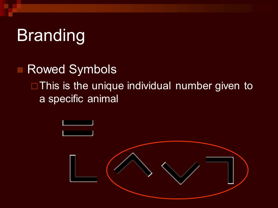 Branding Rowed Symbols  This is the unique individual number given to a specific animal