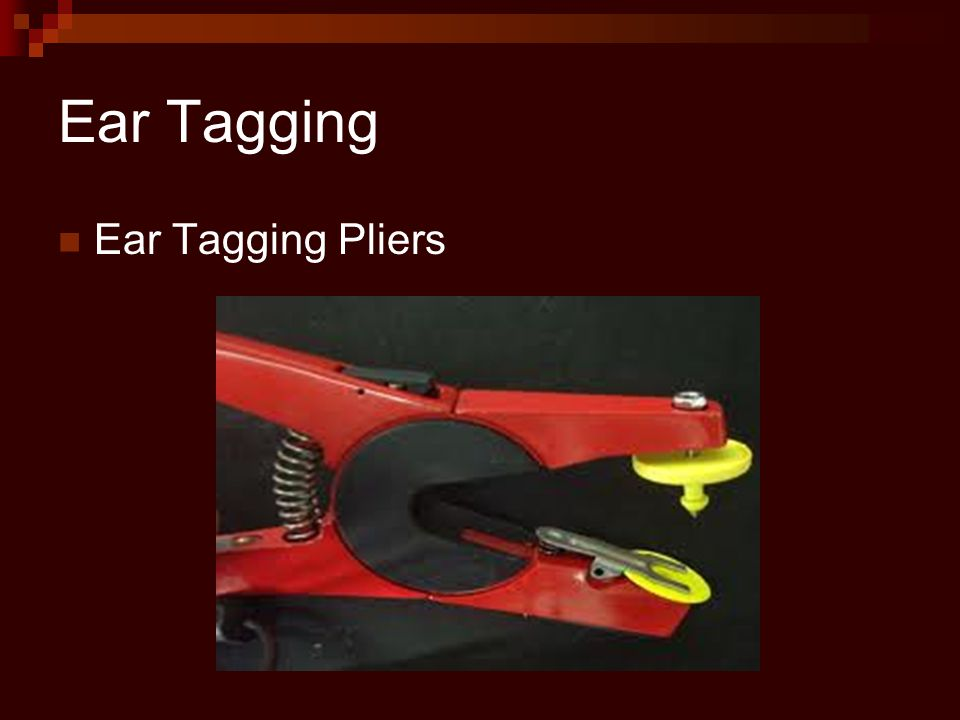 Ear Tagging Ear Tagging Pliers