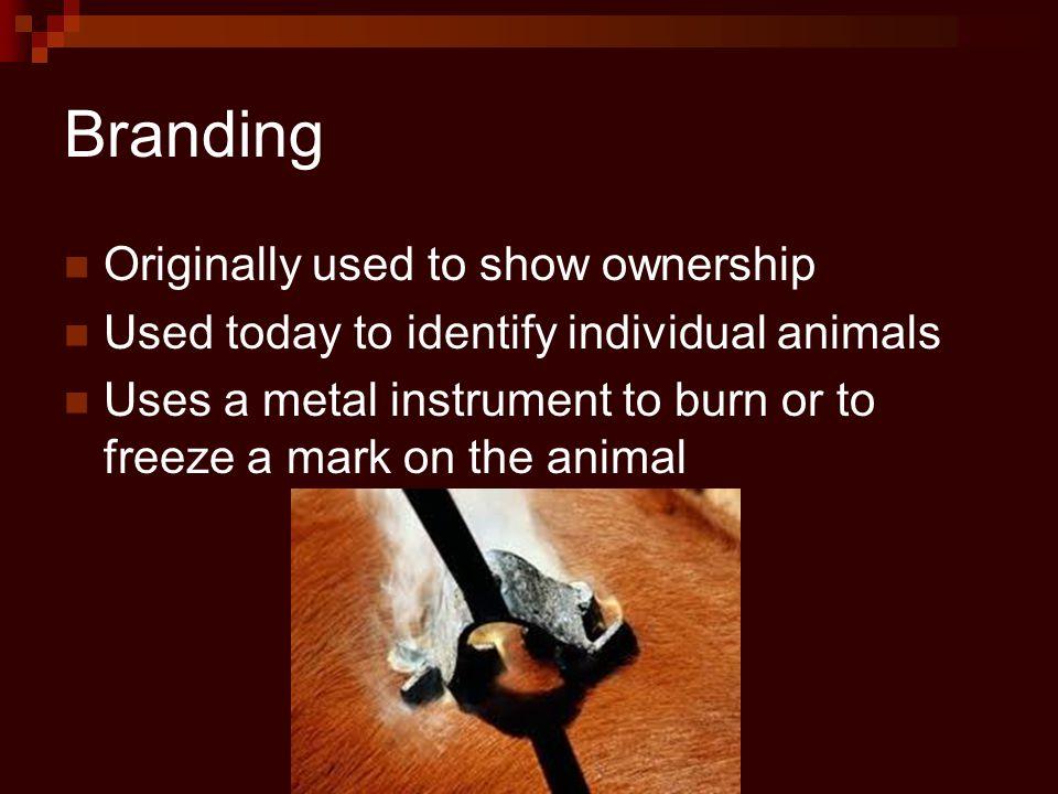 Branding Electric Branding Iron Traditional and Freeze Branding Iron