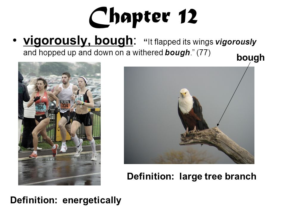 Chapter 12 vigorously, bough: It flapped its wings vigorously and hopped up and down on a withered bough. (77) bough Definition: energetically Definition: large tree branch