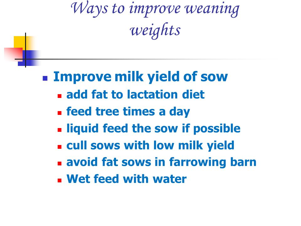 Ways to improve weaning weights Improve milk yield of sow add fat to lactation diet feed tree times a day liquid feed the sow if possible cull sows wi
