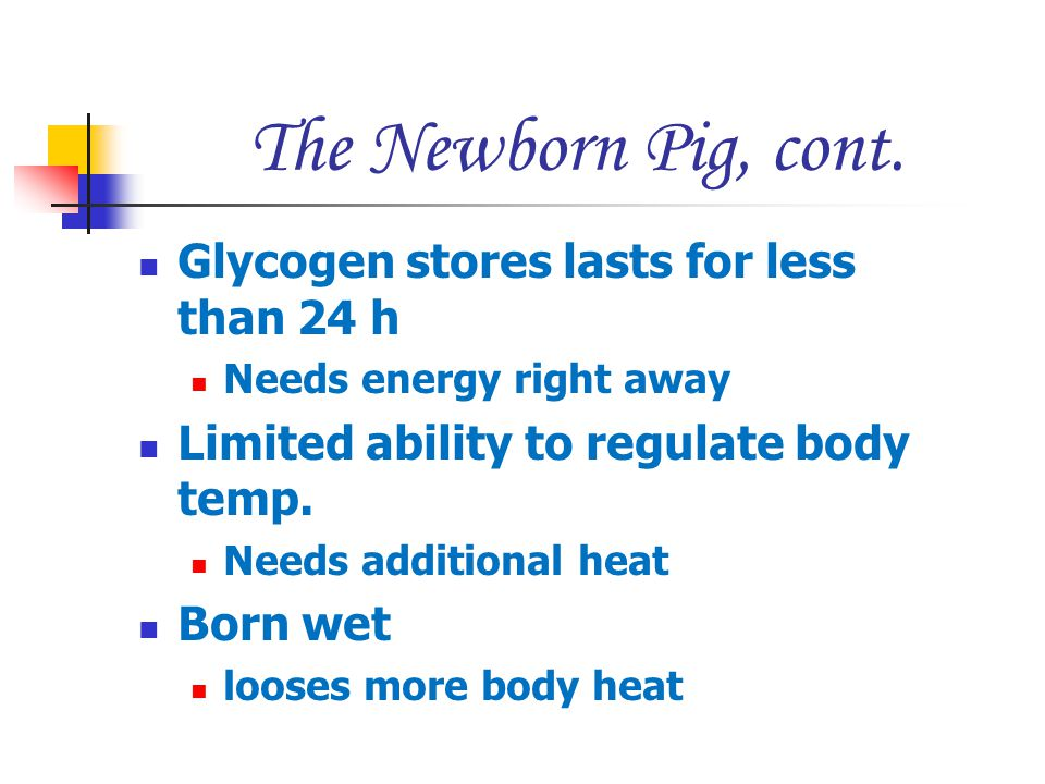 The Newborn Pig, cont. Glycogen stores lasts for less than 24 h Needs energy right away Limited ability to regulate body temp. Needs additional heat B