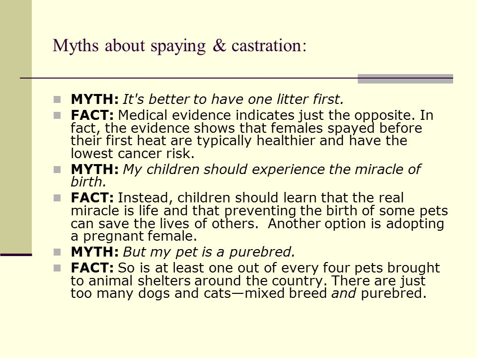 Myths about spaying & castration: MYTH: It s better to have one litter first.