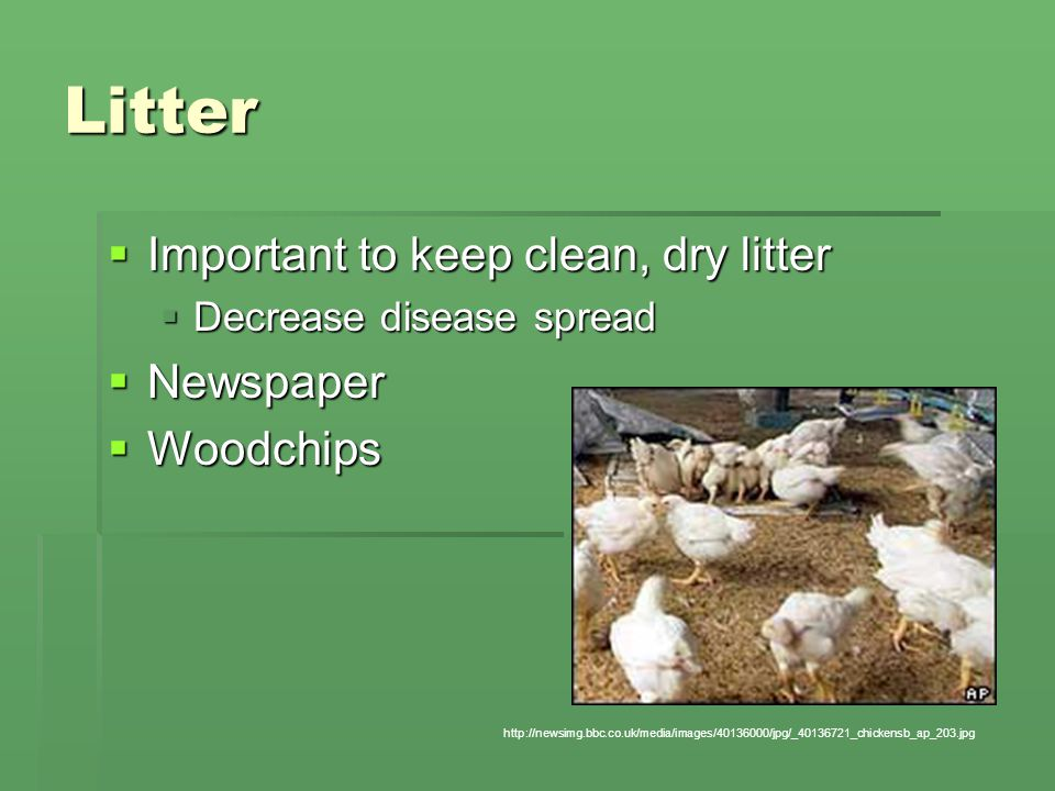 Litter  Important to keep clean, dry litter  Decrease disease spread  Newspaper  Woodchips http://newsimg.bbc.co.uk/media/images/40136000/jpg/_40136721_chickensb_ap_203.jpg