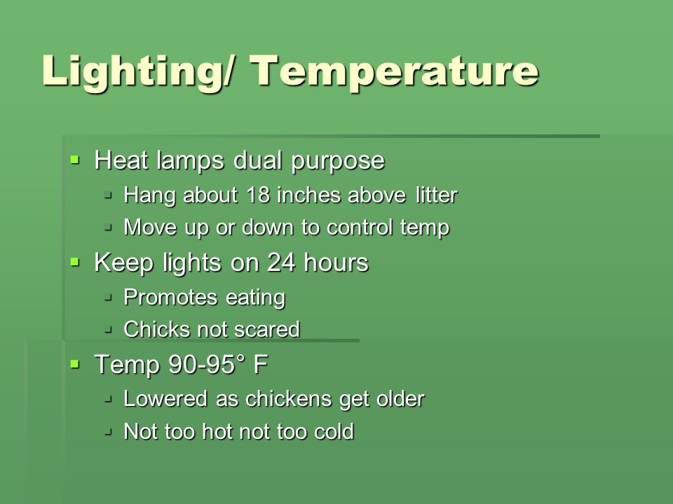 Lighting/ Temperature  Heat lamps dual purpose  Hang about 18 inches above litter  Move up or down to control temp  Keep lights on 24 hours  Promotes eating  Chicks not scared  Temp 90-95° F  Lowered as chickens get older  Not too hot not too cold