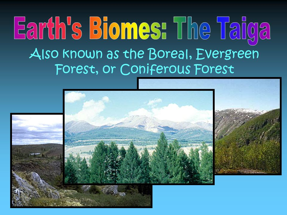 Also known as the Boreal, Evergreen Forest, or Coniferous Forest