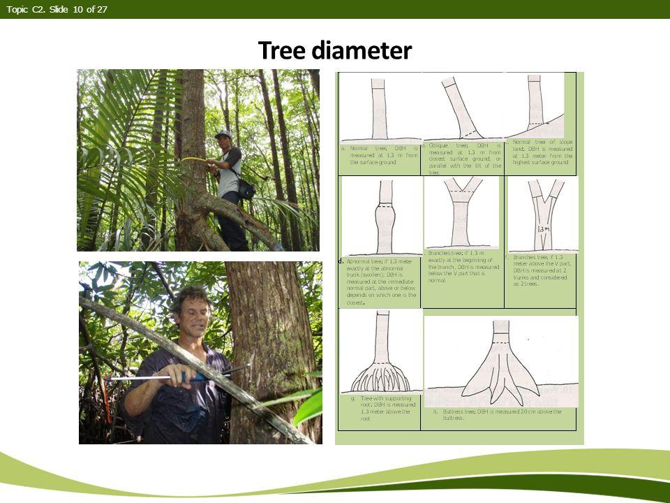 Topic C2. Slide 10 of 27 Tree diameter