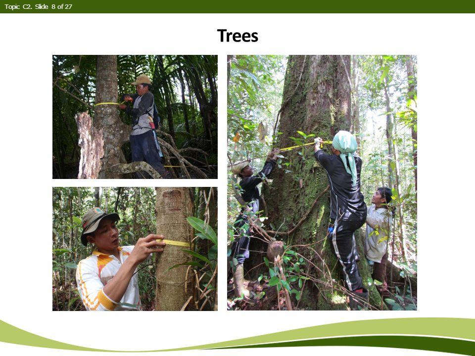 Trees Topic C2. Slide 8 of 27