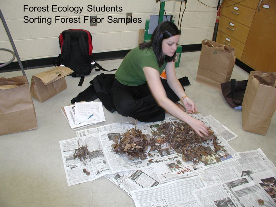 Forest Ecology Students Sorting Forest Floor Samples