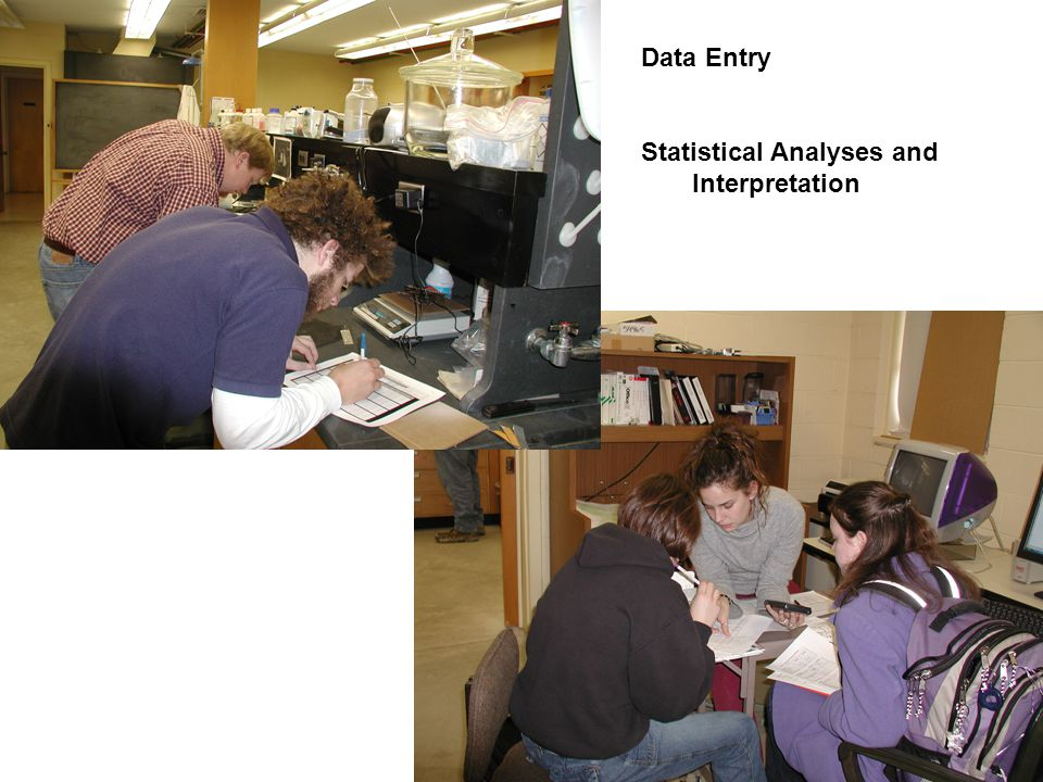 Data Entry Statistical Analyses and Interpretation