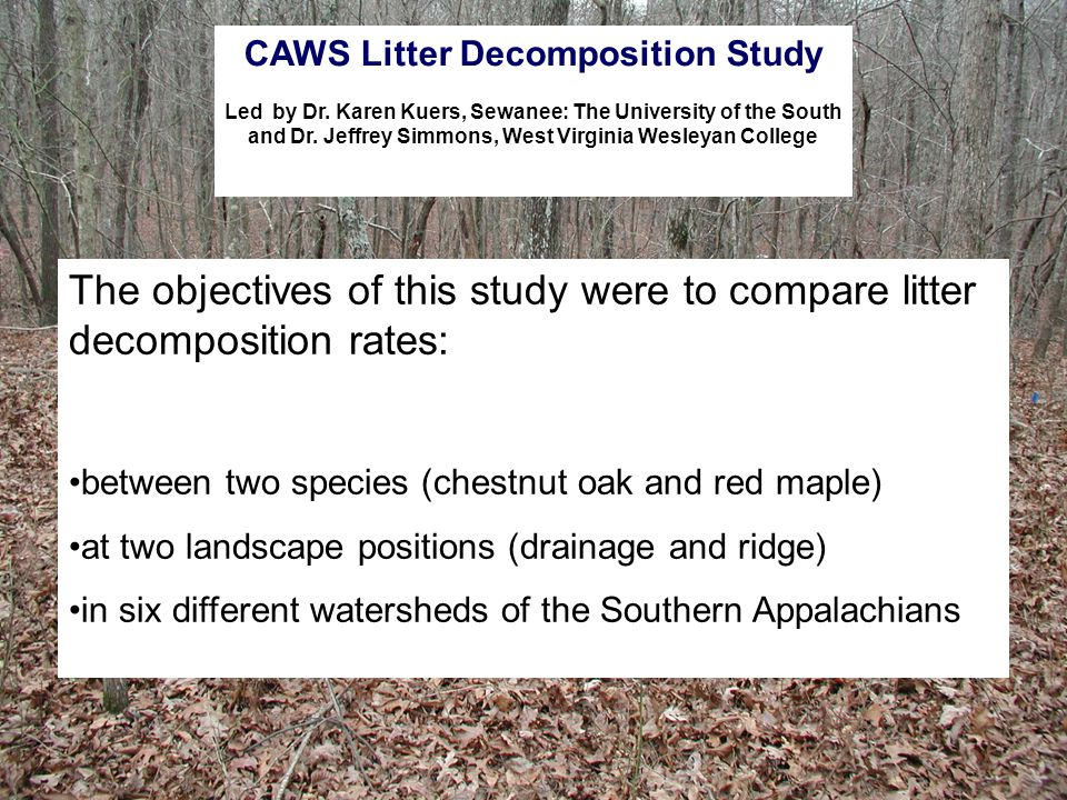 The objectives of this study were to compare litter decomposition rates: between two species (chestnut oak and red maple) at two landscape positions (