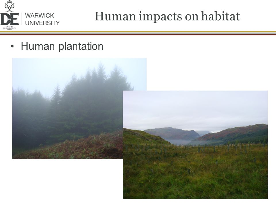 Human impacts on habitat Human plantation