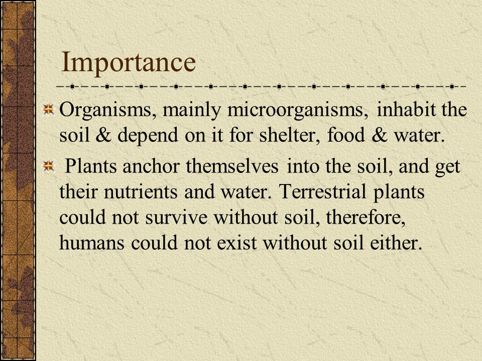 Subsoil (B-horizon) The light-colored subsoil beneath the A- horizon; it is often a zone of illuviation where nutrient minerals have leached out of the topsoil and litter accumulate.