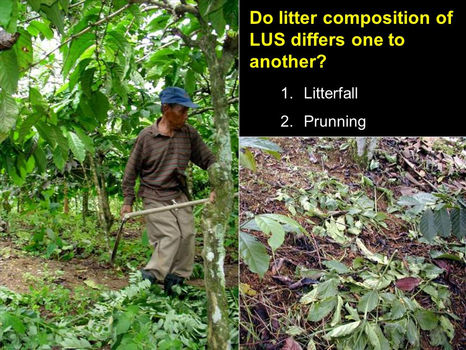 1.Litterfall 2.Prunning Do litter composition of LUS differs one to another?