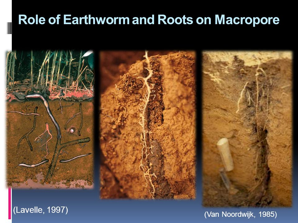 (Lavelle, 1997) (Van Noordwijk, 1985) Role of Earthworm and Roots on Macropore