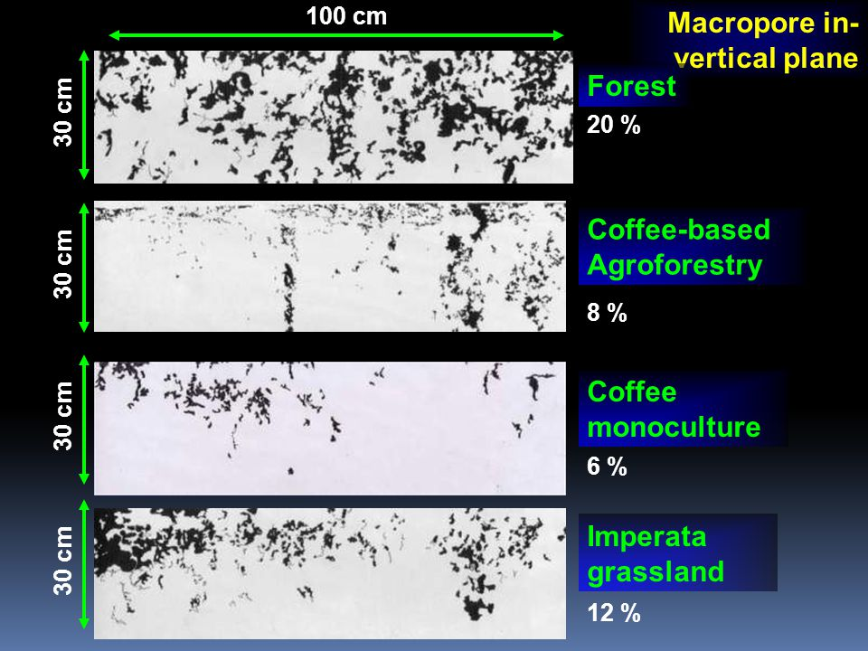 Macropore in- vertical plane Coffee monoculture Imperata grassland Coffee-based Agroforestry Forest 100 cm 30 cm 20 % 8 % 6 % 12 %