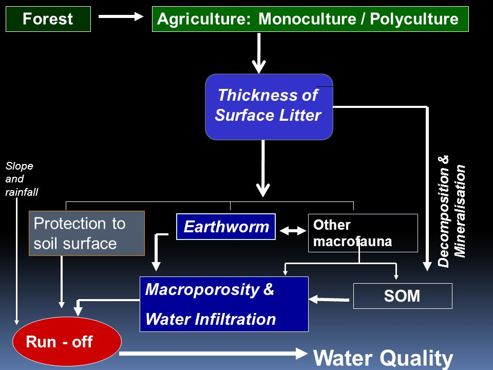 ForestAgriculture: Monoculture / Polyculture Decomposition & Mineralisation Water Quality Run - off Other macrofauna Earthworm SOM Macroporosity & Water Infiltration Thickness of Surface Litter Slope and rainfall Protection to soil surface
