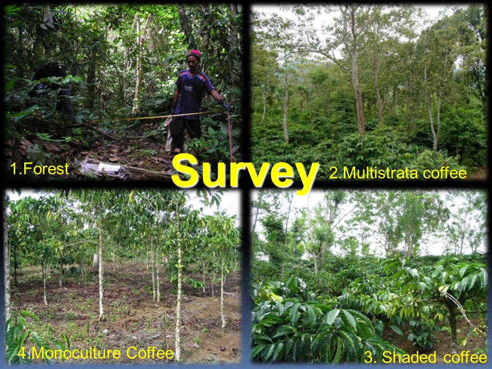 2.Multistrata coffee 3. Shaded coffee 1.Forest 4.Monoculture Coffee Survey