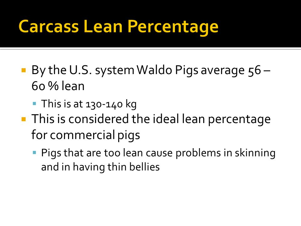  By the U.S. system Waldo Pigs average 56 – 60 % lean  This is at 130-140 kg  This is considered the ideal lean percentage for commercial pigs  Pi