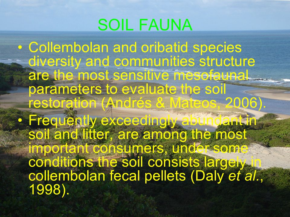 SOIL FAUNA Collembolan and oribatid species diversity and communities structure are the most sensitive mesofaunal parameters to evaluate the soil restoration (Andrés & Mateos, 2006).