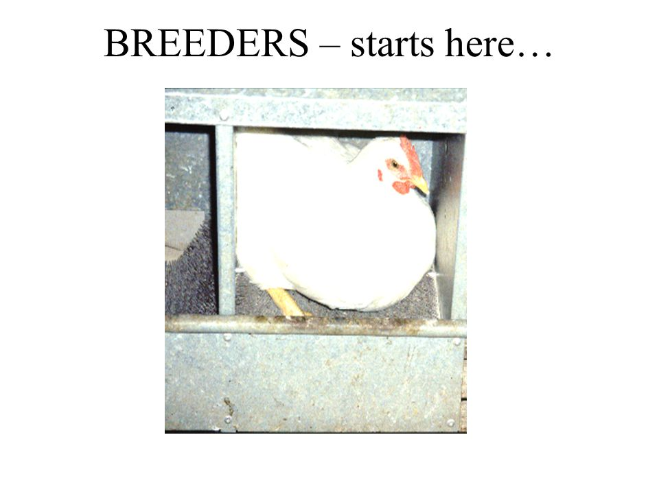 BREEDERS – starts here…