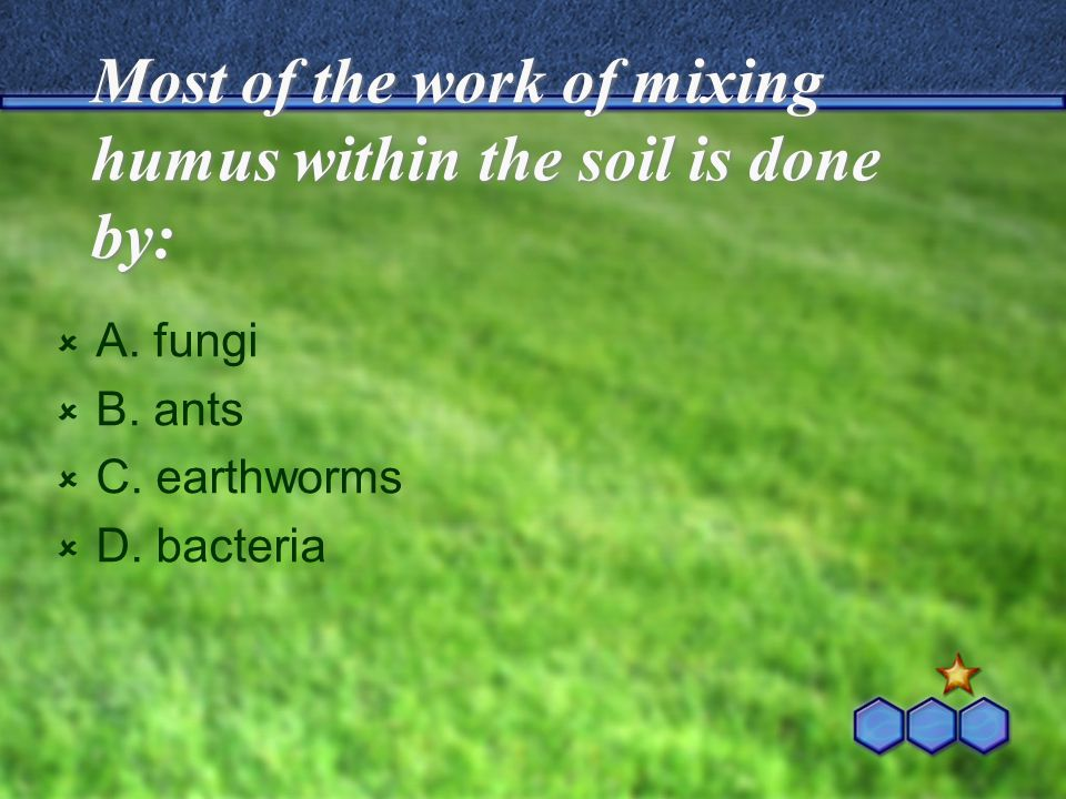 Most of the work of mixing humus within the soil is done by:  A. fungi  B. ants  C. earthworms  D. bacteria