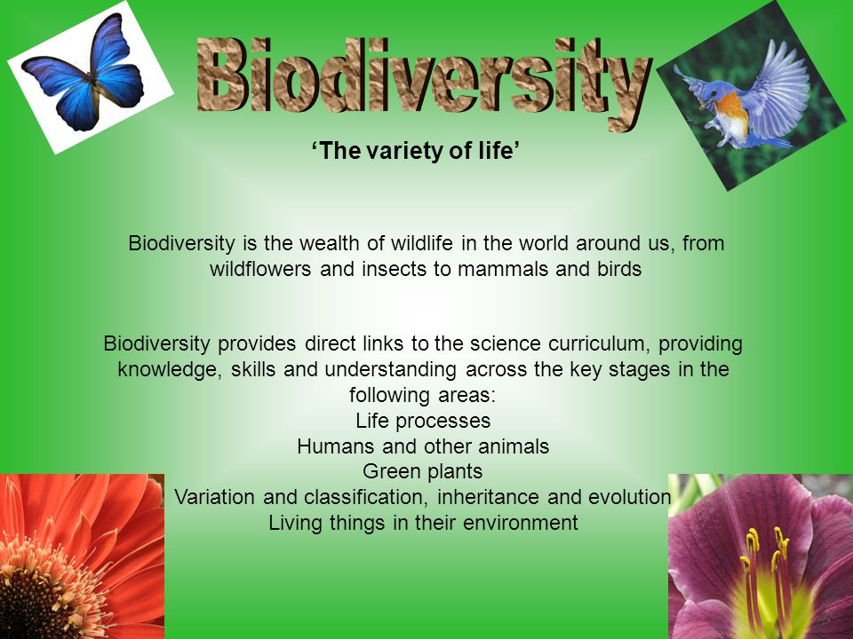 'The variety of life' Biodiversity is the wealth of wildlife in the world around us, from wildflowers and insects to mammals and birds Biodiversity provides direct links to the science curriculum, providing knowledge, skills and understanding across the key stages in the following areas: Life processes Humans and other animals Green plants Variation and classification, inheritance and evolution Living things in their environment