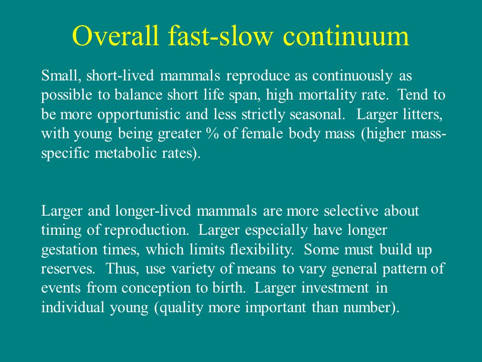 Overall fast-slow continuum Small, short-lived mammals reproduce as continuously as possible to balance short life span, high mortality rate.