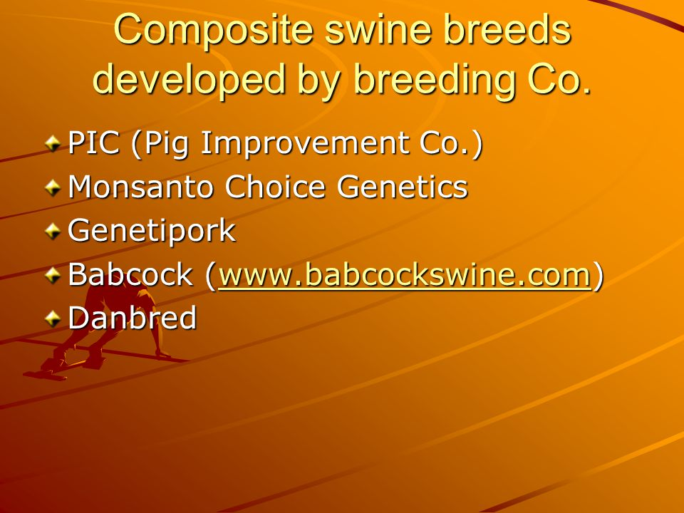 What breeds should be used to produce commercial hogs.