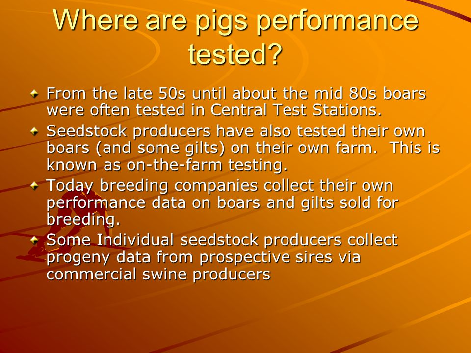 Performance vs Progeny Testing Performance testing is collecting performance data on the individual you use in the breeding herd as the boar or the sow.
