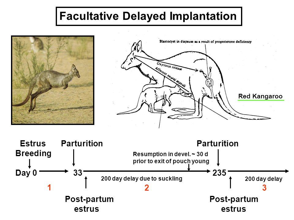 Facultative Delayed Implantation Estrus Parturition Parturition Breeding Day 0 33 235 Post-partum Post-partumestrus 200 day delay due to suckling Resu