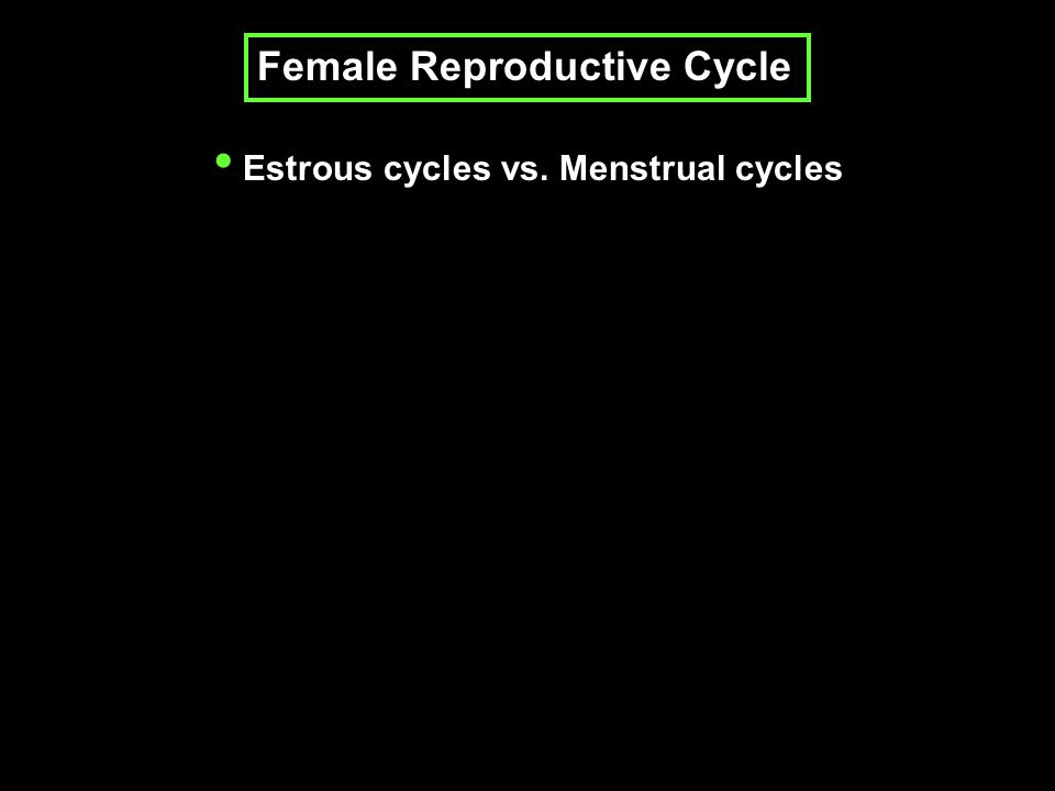 Female Reproductive Cycle Estrous cycles vs. Menstrual cycles