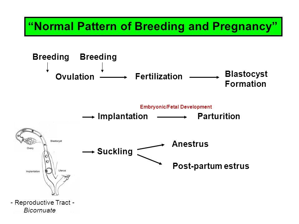 "Breeding Ovulation Fertilization Blastocyst Formation ImplantationParturition Suckling Anestrus Post-partum estrus ""Normal Pattern of Breeding and Pre"