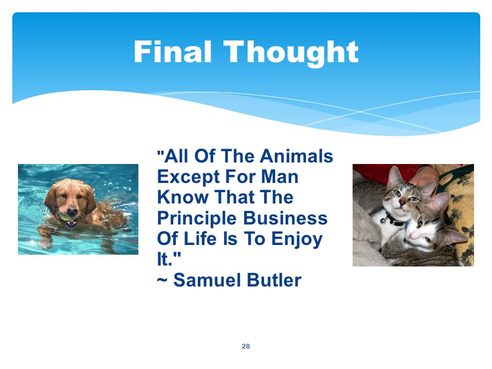 28 All Of The Animals Except For Man Know That The Principle Business Of Life Is To Enjoy It. ~ Samuel Butler Final Thought
