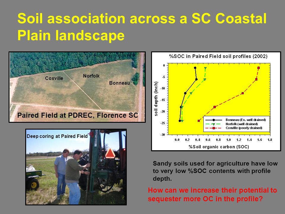 Soil association across a SC Coastal Plain landscape Coxville Norfolk Bonneau Paired Field at PDREC, Florence SC Deep coring at Paired Field Sandy soils used for agriculture have low to very low %SOC contents with profile depth.