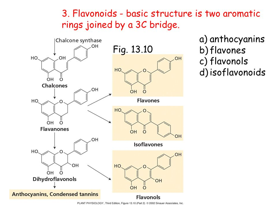 Fig. 13.10 3. Flavonoids - basic structure is two aromatic rings joined by a 3C bridge. a)anthocyanins b)flavones c)flavonols d)isoflavonoids