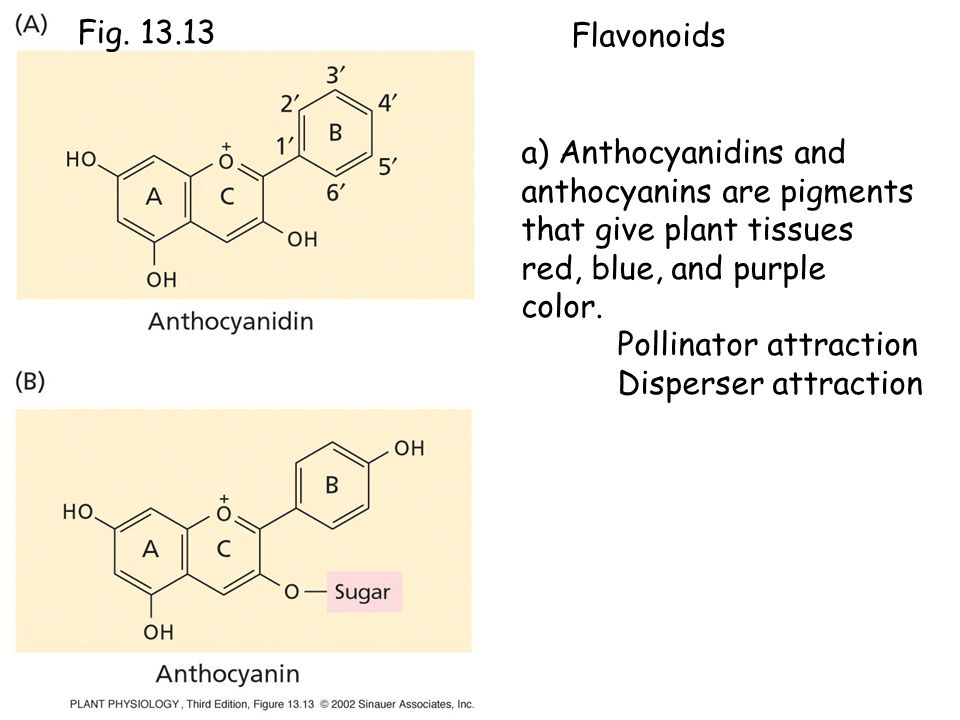 a) Anthocyanidins and anthocyanins are pigments that give plant tissues red, blue, and purple color.