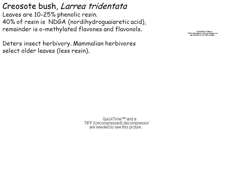 Creosote bush, Larrea tridentata Leaves are 10-25% phenolic resin. 40% of resin is NDGA (nordihydroguaiaretic acid), remainder is o-methylated flavone
