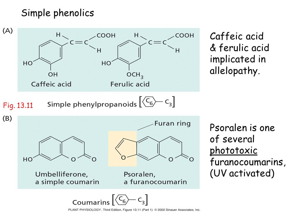 Caffeic acid & ferulic acid implicated in allelopathy. Psoralen is one of several phototoxic furanocoumarins, (UV activated) Simple phenolics Fig. 13.